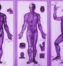 How Qi (Chi) Energy Flows Through The 12 Meridians Points In Your Body