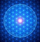 Evidence Shows That DNA Begins as a Quantum Wave